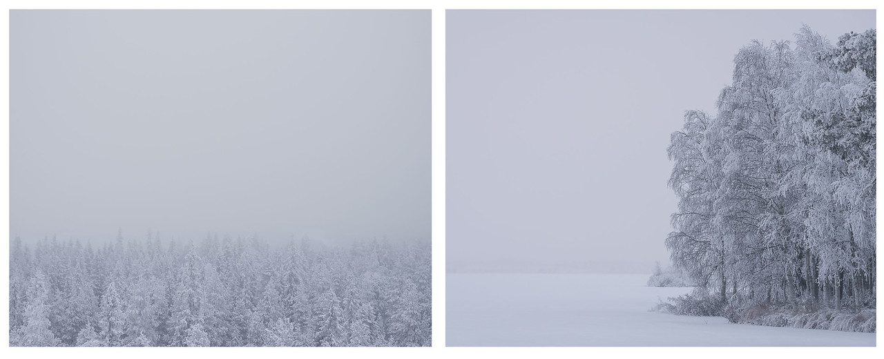 A diptych of some frozen trees in Lapland, Finland.